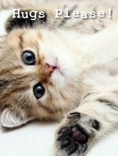 Do you have a hug for this kitten cutie?