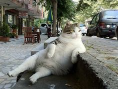 21 Funny Photos Of Cats Sitting Awkwardly. Number 6 Totally Cracked Me Up!