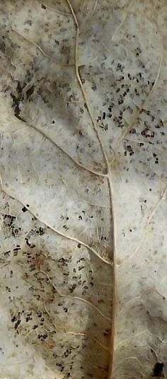 ~ texture inspiration from a leaf Patterns In Nature, Textures Patterns, Leaf Texture, Natural Forms, Natural Texture, Seed Pods, Wabi Sabi, Autumn Leaves, Earth Tones