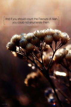 You will loose the count. Guaranteed!  www.lionofAllah.com