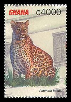 """Ghana - Leopard [Panthera pardus] Republic of Ghana, is a sovereign unitary presidential constitutional democracy, located along the Gulf of Guinea and Atlantic Ocean, in the subregion of West Africa. Spanning a land mass of 238,535 km2, Ghana is bordered by the Ivory Coast in the west, Burkina Faso in the north, Togo in the east and the Gulf of Guinea and Atlantic Ocean in the south. The word Ghana means """"Warrior King"""" in Mande."""