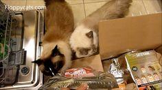 Buy Whole Life Freeze Dried Cat Treats: http://amzn.to/1w7GxxG