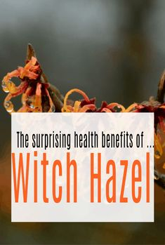 Health Benefits of Witch Hazel - Witch hazel i has so mnay amazing health and wellbeing benefits especiailly related to skin problems. Witch Hazel Oil, Witch Hazel For Skin, Health And Wellbeing, Health Benefits, Benefits Of Witch Hazel, Hemorrhoid Relief, Was Ist Pinterest, Alcohol Content, Top