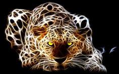 Light of Tiger