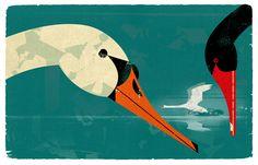 Swans by Dieter Braun.