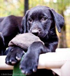 Hopkinton, Massachusetts - Mixed Breed (Medium). Meet Scampi In Foster, a for adoption. https://www.adoptapet.com/pet/19914292-hopkinton-massachusetts-mixed-breed-medium-mix