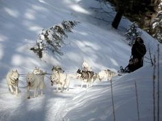 9 Don't Miss Dog Sled Rides