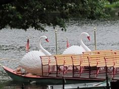 Swan boats in Boston Public Garden