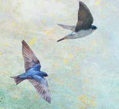close ups of birds