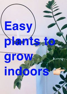 Easy plants to grow indoors Easy Plants To Grow, Growing Plants Indoors, Indoor Plants, Planters, Inside Plants, Plant, Window Boxes, Flower Pots, Flower Planters