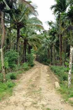 #Homestays in #Wayanad. Walk around Best Wayanad homestays & Best #Homestay in Wayanad, #Kalpetta. To feel the best of Wayanad and nature visit us once and we assure that will surely make a difference.