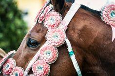"""Rodrigues, il cavallo del capocorsa del martedi della Sartiglia 2015, bardato con le coccarde a """"s'antiga""""."""