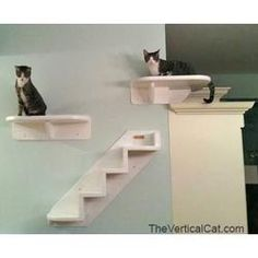 Beautiful Our Wrap Around Corner Cat Shelf Is Here! This Wall Mounted Shelf Offers An  Innovative Option For Our Vertical Cat Wall Climbing System
