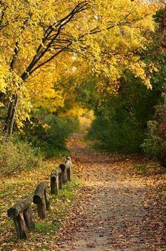 The Path to Autumn ~ Photos Hub