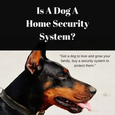 Is a dog a home security system? When it comes to home security planning there are many things to do to prevent burglary. A dog is one of them, but does it really protect your home and how effective is it? Dogs used in home security are really a preventative measure and if your neighbours...