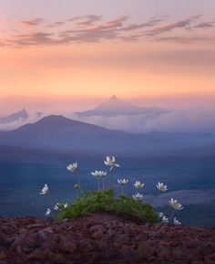 "Three Sisters Wilderness, Oregon - Stunning Photography by Marc Adamus - In his words, ""Lonely flowers sit high above the valleys and fires below which make for a soft, glowing atmosphere at sunset across the landscape looking towards Oregon's Mount Jefferson."""