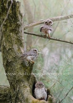 3 Little Owls reminds me of my brothers and I. <3