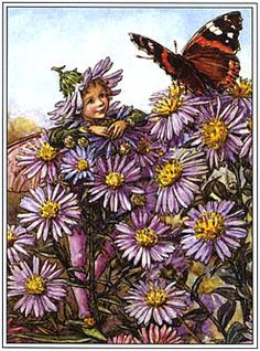 L'elfe des Asters - By Cicely Mary Barker