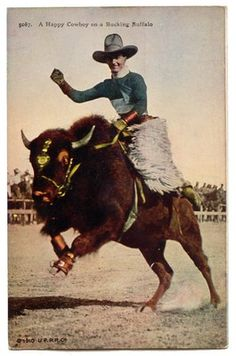 Vintage Photographs of Buffalo/Bison. A Happy Cowboy on a Bucking Buffalo.
