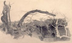Anthony Frederick Sandys Study of Trees and Undergrowth 1855