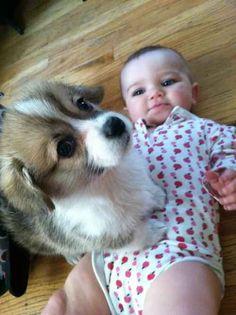 Corgis love standing on babies