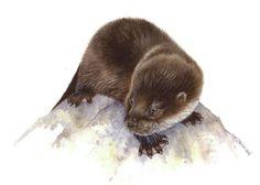 Lyn Wells. Otter Cub