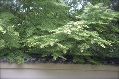kimochishidai