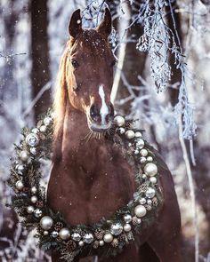 Cute Horses, Horse Love, Beautiful Horses, Animals Beautiful, Cute Horse Pictures, Horse Photos, Christmas Horses, Christmas Animals, Equine Photography