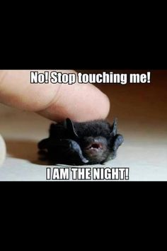 Bats in Florida are just tiny little things
