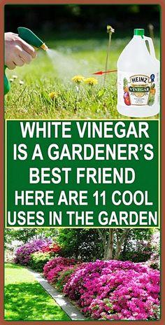 Garden Pests, Garden Tools, Garden Ideas, Garden Insects, Backyard Ideas, Organic Gardening, Gardening Tips, Indoor Gardening, Vegetable Gardening
