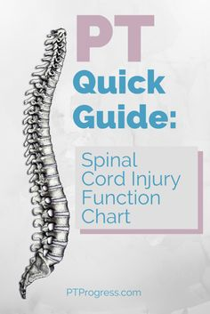 Spinal Cord Injury Chart