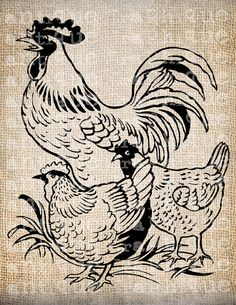 Antique Farm coqs poule en français Provincial Design Digital Download de Papercrafts, transfert, oreillers, etc., toile de jute n° 3135