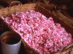 grasse france | Rose Petals Becoming Perfume in Grasse, France