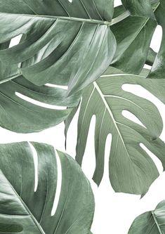 Leaves Wallpaper Iphone, Iphone Wallpaper App, Plant Wallpaper, Botanical Wallpaper, Homescreen Wallpaper, Green Wallpaper, Aesthetic Iphone Wallpaper, Wallpaper Backgrounds, White Wallpaper For Iphone