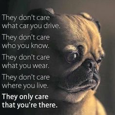 Funny Dogs but only Pug Videos - Pugs are Awesome Pug Quotes, Animal Quotes, Pug Love, I Love Dogs, Gif Pug, Pet Sitter, Pekinese, Pugs And Kisses, Comics