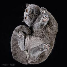 underneath-cat-photographs-undercats-andrius-burba-8