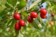 Still Life, Flowers, Plants, Tricks, Berry, Gardening, Youtube, Patio, Planting