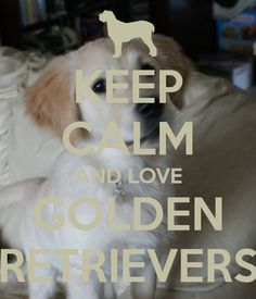 KEEP CALM AND LOVE GOLDEN RETRIEVERS