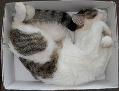 This position is for experienced box habitation.  :)