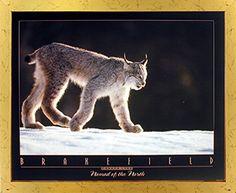 Canada Lynx Tom Brakefield Snow Wild Animal Wall Decor Golden Framed Picture Art Print (18x22) by Impact Posters Gallery, http://www.amazon.com/dp/B00IR4TVD8/ref=cm_sw_r_pi_dp_x_tfUDzbS87YAPZ