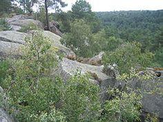Forêt vue des gorges de Franchard