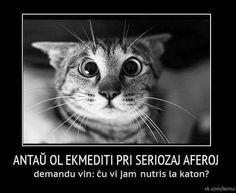 Esperanto Language, All About Cats, Movie Posters, Animals, Learning, Nice, Frases, Falling Down, Faces