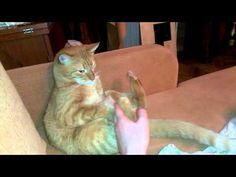 Hey Kitty, Stop Hitting Yourself!