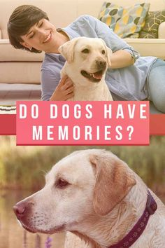 'Do dogs have memories?' is a question which fascinates dog lovers and scientists alike. We look at how much has been proven about dog memory so far. Fun Facts About Dogs, Dog Facts, I Love Dogs, Puppy Love, Human Memory, Happy Puppy, Dog Memorial, Dog Feeding, Dogs Of The World