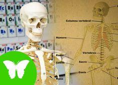 La Eduteca - El esqueleto