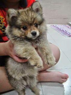 http://encyclopediaofdogbreeds.com/small-dog-breeds/