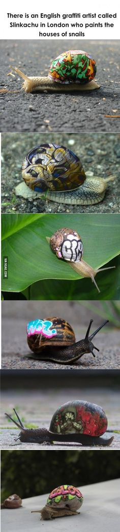 An artist that does graffiti on the homes of snails.