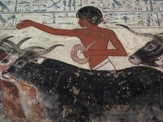 Ancient Egyptian Tomb Art  detail, Nebamun viewing his geese and cattle, showing the cattle and a servant, painting from the tomb-chapel of Nebamun, accountant in the Temple of Amun (Karnak), circa 1350 BC, Ancient Egypt, panel in the British Museum, London WC1.