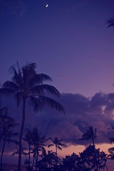 sunset / moon / palm trees