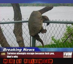 Must be some hot lady tortoises on the other side...